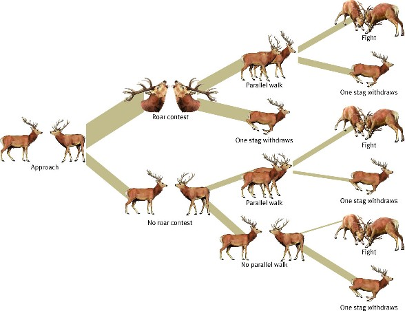 Natural Selection Examples In Deer
